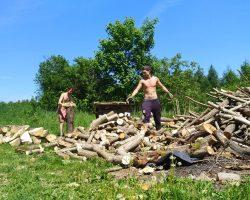 Kultivácia lesov v Paldenlingu